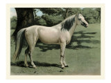 Cassell&#39;s Horse I