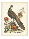 Regal Pheasants III