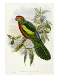 Gould Parrots II