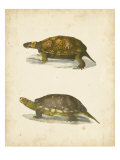 Turtle Duo I