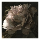 Moonlit Peony II