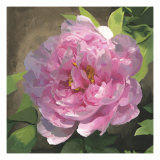 Peony in Pink I