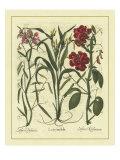 Besler Floral III