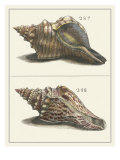 Seashell Menagerie II