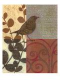 Damask Sparrow