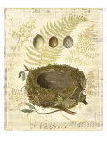 Melodic Nest and Eggs I