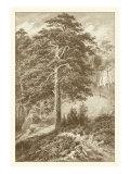 Sepia Wild Pine