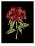 Crimson Flowers on Black II