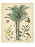 Fruitful Palm I