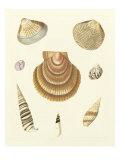 Knorr Shells V