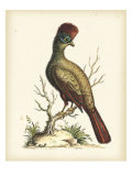 Regal Pheasants IV