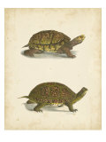 Turtle Duo III