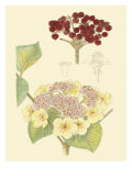 Berries & Blossoms V