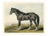 Cassell&#39;s Horse II