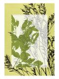 Translucent Wildflowers III