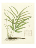 Eaton Ferns I