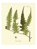 Antique Fern VII