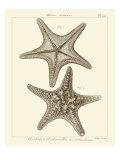 Striking Starfish II