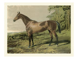 Cassell&#39;s Horse IV
