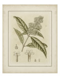 Tinted Botanical II