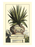 Antique Munting Aloe I