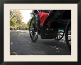 Low Angle View of Horse-Drawn Carriages in Central Park