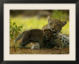 Leopard Licks a Young Cub  Mombo  Okavango Delta  Botswana