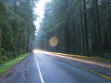 Us Route 101  Jedediah Smith Redwoods State Park  Crescent City  Del Norte County  California  USA