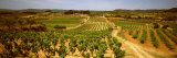 Vineyard  Bot  Terra Alta  Tarragona Province  Catalonia  Spain