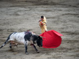 Matador and a Bull in a Bullring  Lima  Peru