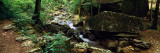 Stream Flowing in Forest  Lost Valley State Park  Ozark National Forest  Ozark Mountains  Arkansas
