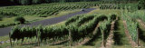 Road Passing Through Vineyards  Near Traverse City  Grand Traverse County  Michigan  USA