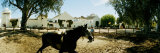 Horse Running in an Paddock  Gerena  Seville  Seville Province  Andalusia  Spain