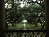 Oak Trees in Front of a Mansion  Oak Alley Plantation  Vacherie  Louisiana  USA