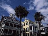 Palm Trees in Front of Buildings  Charleston  Charleston County  South Carolina  USA