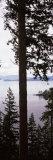 Trees at the Seaside  Teddy Bear Cove  Chuckanut Bay  Skagit County  Washington State  USA