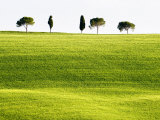 Classic Tuscan Landscape  Near San Quirico  Valle De Orcia  Tuscany  Italy