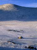 Bayan-Olgii Province  Yurts in Winter  Mongolia