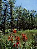 Trees in Swamp  Magnolia Plantation and Gardens  Charleston  Charleston County  South Carolina  USA