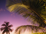 St Lucia  Sunset Through Palms on the Island of St Lucia  Caribbean