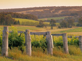 Vineyard  Margaret River  Western Australia  Australia