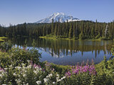 Reflection of Mountain and Trees in Lake  Mt Rainier National Park  Washington State  USA