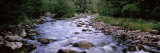 River Flowing Through a Forest  West Branch of Ausable River  Adirondack Mountains  New York State