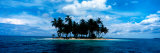 Palm Trees on an Island  San Blas Islands  Panama