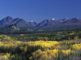Fall Colours over Denali National Park  Alaska  USA