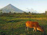 Luzon Island  Bicol Province  Mount Mayon Volcano  Philippines