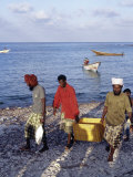 Fishermen Bring in their Catch at Sekra  a Fishing Village on Socotra's North Coast