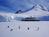 Antarctic Peninsula  Port Lockroy  Gentoo Penguins and Cruise Ship Clipper Adventurer  Antarctica