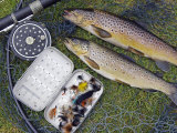Two Fine Brown Trout Caught with Dapping Fly and Rod from a Boat on Loch Ba