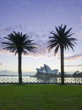 New South Wales  Sydney  Sydney Opera House Through Palms  Australia